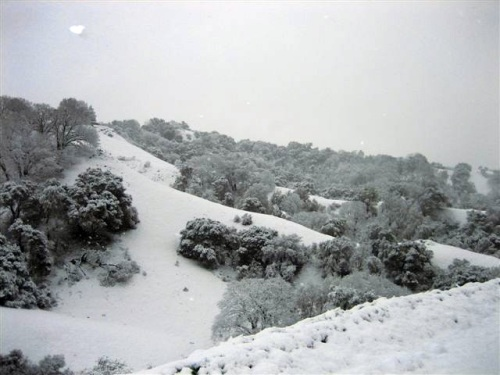 snow-feb-09-0082